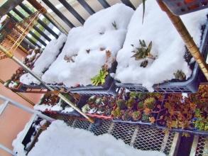東京地方~45年振りの大雪は陽が昇るとあっという間に溶け始めました♪2014.02.09