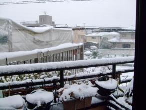16年振りの大雪予報~東京南部~朝の景色(ToT)/~~~・・・2014.02.08~午前9時