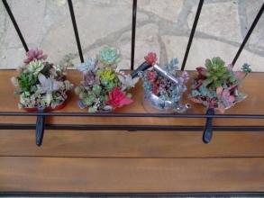 多肉植物キッチンオブジェ~ぼちぼち作りこの棚いっぱい飾りたいです♪2014.01.03