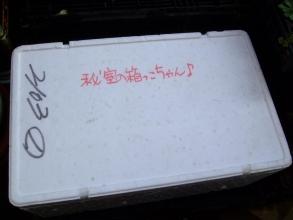 実生苗の防寒発泡スチロール箱~秘密の箱っこちゃん♪蓋~整理整頓しました2014.01.02