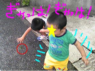 snap_tanosiiikuji962_201295161458.jpg