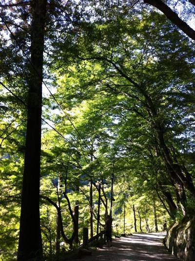 fc2blog_20121023202939c71.jpg