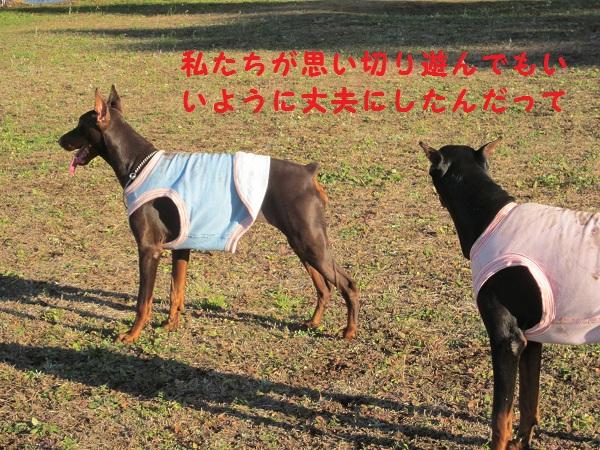 04_20121211194043.jpg