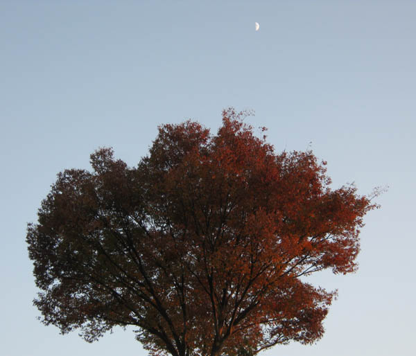 紅葉と月-2