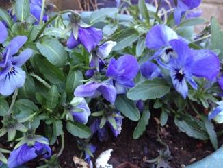 fc2blog_20121222153341e2c.jpg